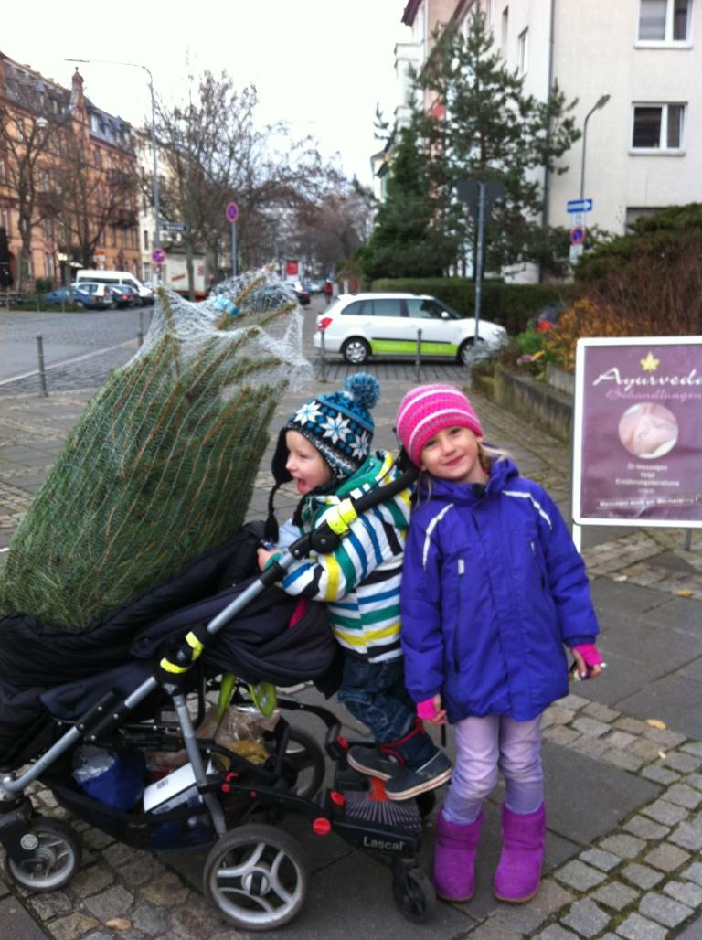 Da sitzt er unser kleiner Weihnachtsbaum