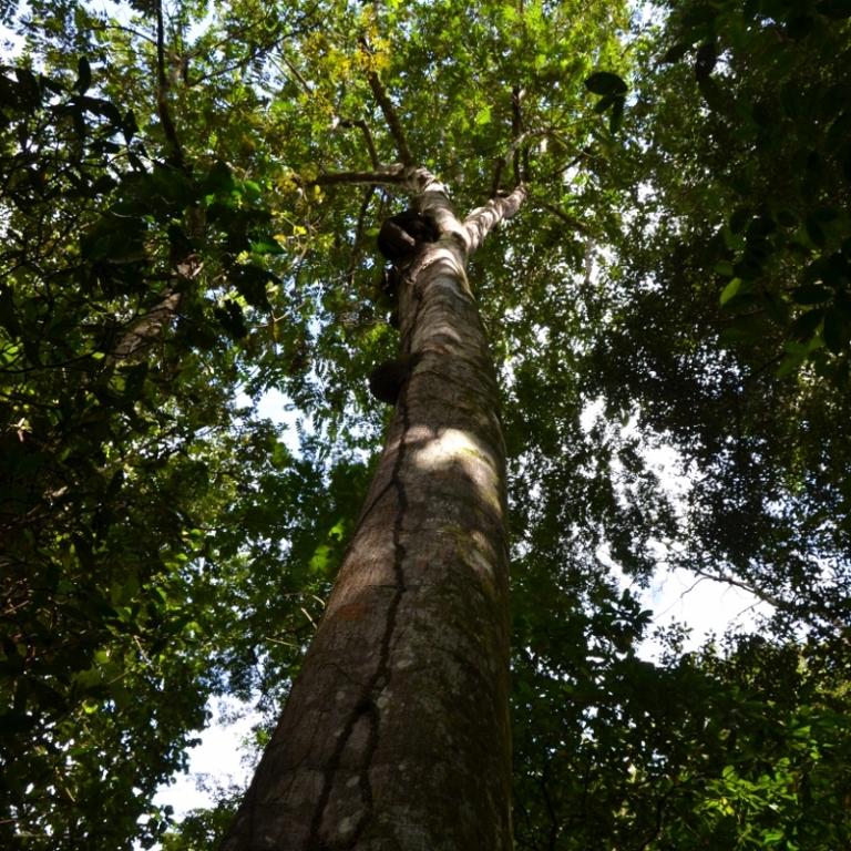 Termitenbaum
