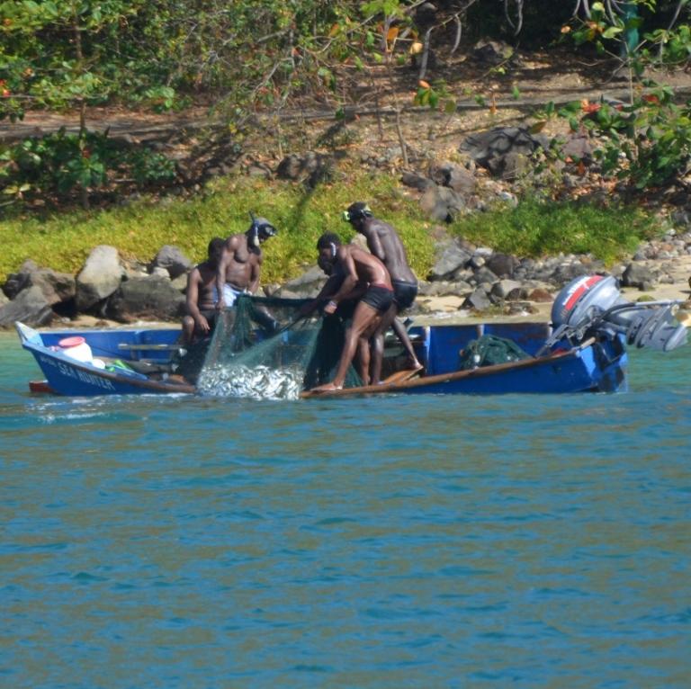 Erste Überfahrt nach Martinique - Fische