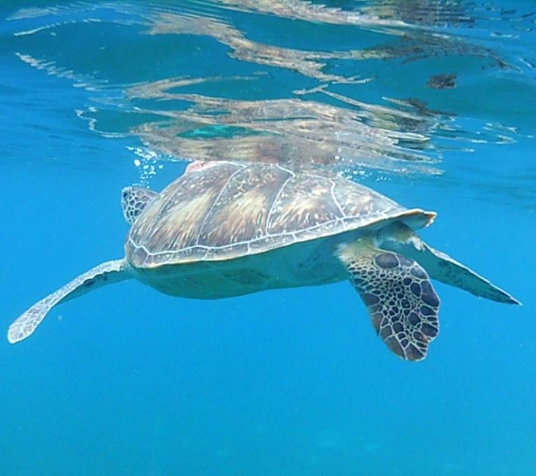 Schildkröte!!!
