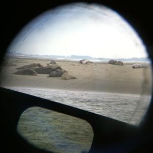 08-28 Seehunde